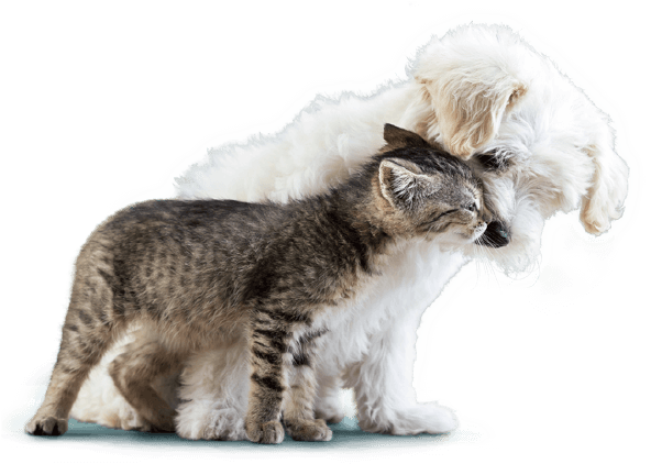 healthy cat and dog