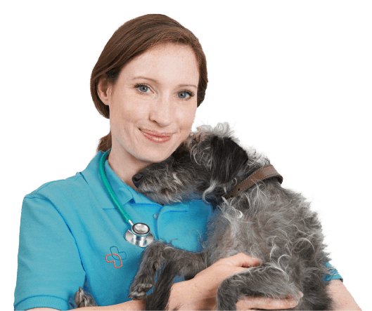 Pet Practice vet and dog