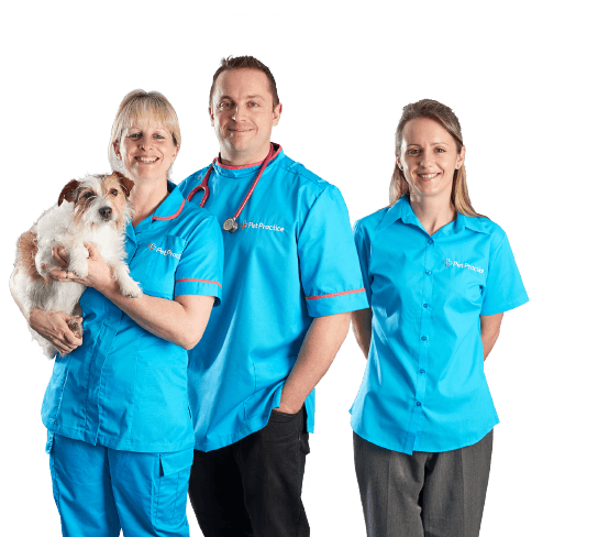 Pet Practice veterinary staff